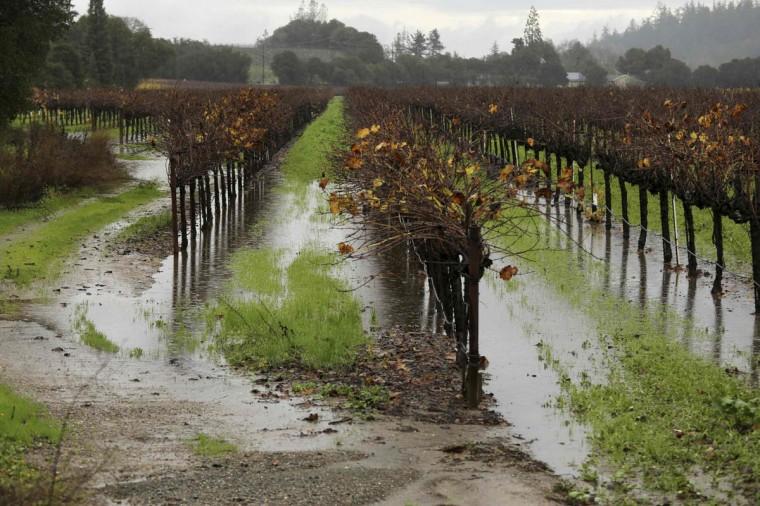 A vineyard is shown partially submerged in water in Healdsburg, California December 12, 2014. (Robert Galbraith/Reuters photo)