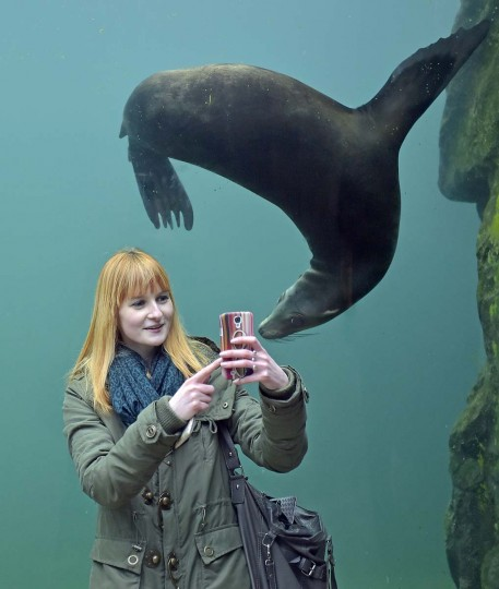 A woman takes a selfie with a seal in a water tunnel at the zoo in Gelsenkirchen, Germany on Monday, Jan. 26, 2015. (AP Photo/Martin Meissner)