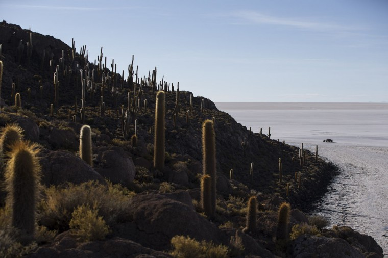 A competitor races past Cactus Island along the Uyuni salt flats during the eighth stage of the Dakar Rally 2015 between Uyuni, Bolivia, and Iquique, Chile, Sunday, Jan. 11, 2015. (AP Photo/Felipe Dana)