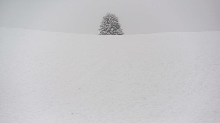 A tree stands on a snow-covered hill near Thaining, southern Germany. (Nicolas Armer/AFP-Getty Images)