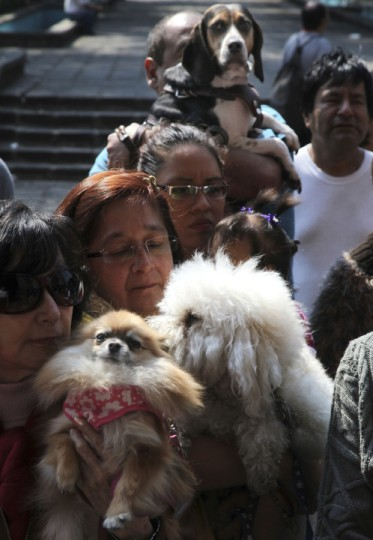 Pet owners and their dogs arrive for a feast day Mass in honor of Saint Anthony, the patron saint of animals, at the Saint Fernando church, in Mexico City. Many people in Mexico bring their pets to churches to be blessed by the priest. (Marco Ugarte/AP Photo)