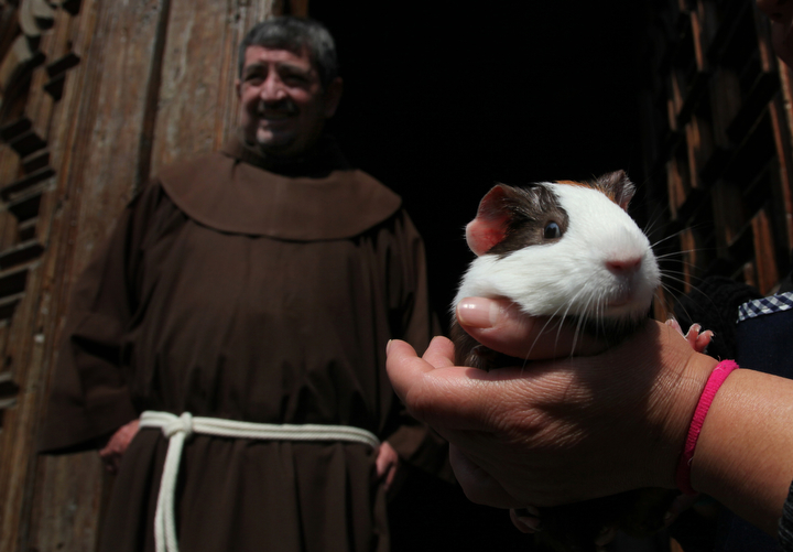 A pet owner holds his guinea pig named Riec as Father Francisco bestows a blessing on the pet rodent during a feast day Mass in honor of Saint Anthony, the patron saint of animals, at the Saint Fernando church, in Mexico City. Many people in Mexico bring their pets to churches to be blessed by the priest. (Marco Ugarte/AP Photo)