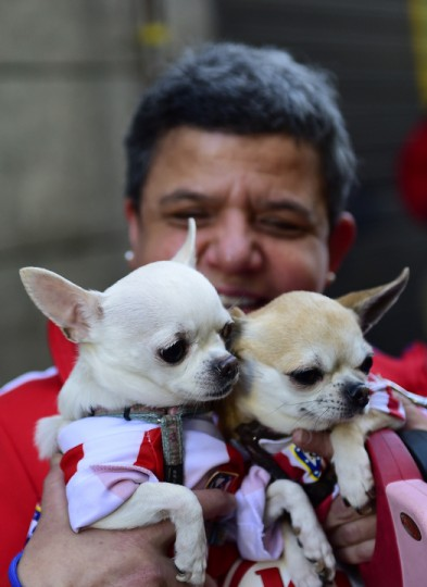 Two dogs wait to be blessed by a priest at San Anton church in Madrid marking San Anton Abad's Day (Saint Anthony.) Dogs, cats, rabbits and even turtles, many dressed in their finest, trooped into churches across Spain in search of blessing on the patron saint of animals Saint Anthony's Day. (Pierre-Philippe Marcou/AFP-Getty Images)