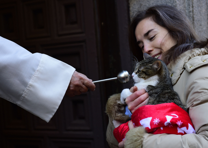 A cat is blessed by a priest at San Anton church in Madrid marking San Anton Abad's Day (Saint Anthony.) Dogs, cats, rabbits and even turtles, many dressed in their finest, trooped into churches across Spain in search of blessing on the patron saint of animals Saint Anthony's Day. (Pierre-Philippe Marcou/AFP-Getty Images)