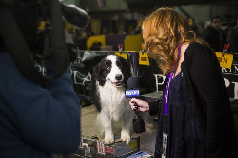 A woman interviews a dog during the 138th annual Westminster Dog Show at the Piers 92/94 on February 10, 2014 in New York City. (Photo by Andrew Burton/Getty Images)