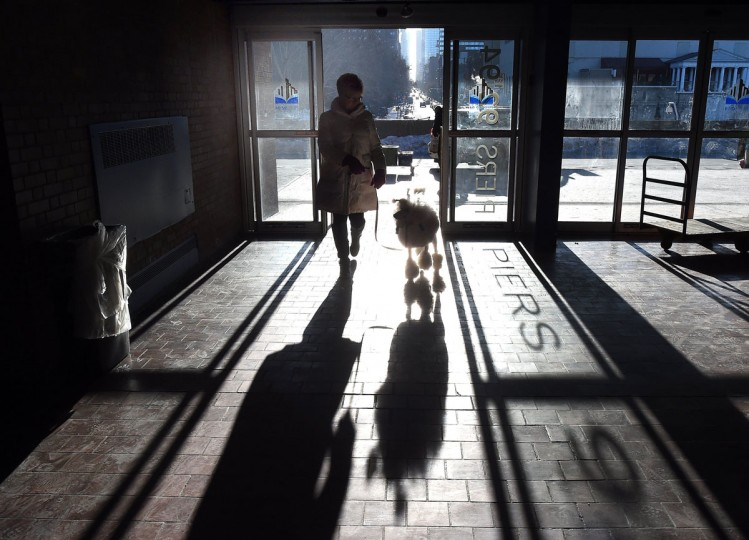A handler and a Poodle enter the benching area at Pier 92 and 94 in New York City on the first day of competition at the 139th Annual Westminster Kennel Club Dog Show February 16, 2015. (Timothy Clary/AFP/Getty Images)