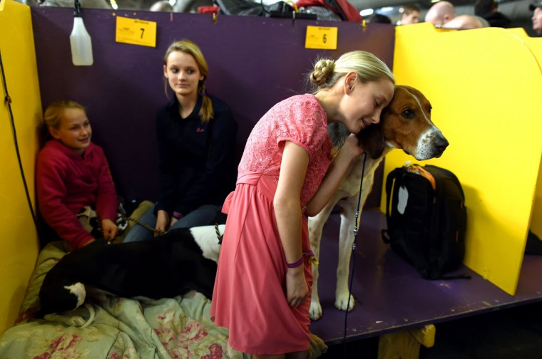 "Faith Rogers,11, with American Foxhound ""Bobby in the benching area at Pier 92 and 94 in New York City on the first day of competition at the 139th Annual Westminster Kennel Club Dog Show February 16, 2015. (Timothy Clary/AFP/Getty Images)"