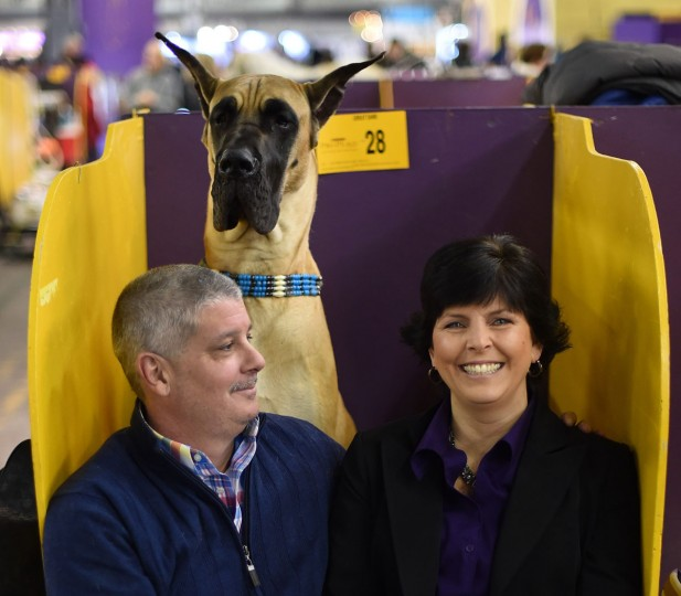 Karen and John Pacino sit with their Great Dane in the benching area at Pier 92 and 94 in New York City on the 2nd day of competition at the 139th Annual Westminster Kennel Club Dog Show February 17, 2015. (Timothy Clary/AFP/Getty Images)