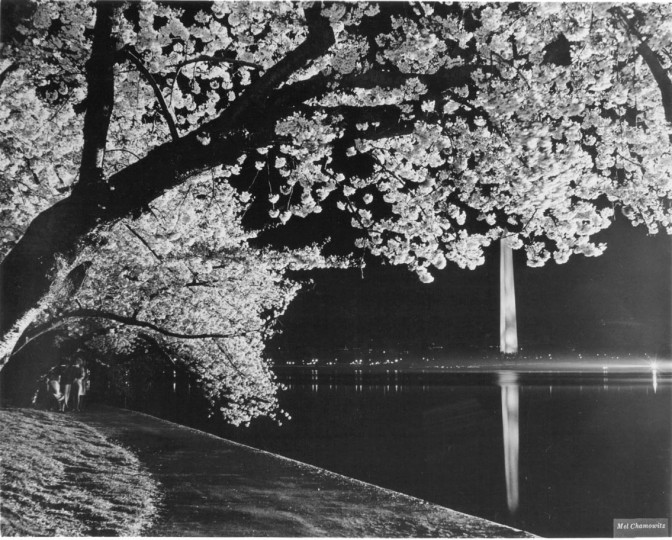 April 5, 1971: The Tidal Basin and D.C.'s cherry blossoms, via the Washington vistor's bureau.