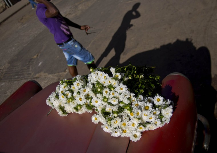 In this Thursday, Jan. 29, 2015 photo, a man walks past daisies bunches resting on the trunk of a 1957 Buick, in Havana, Cuba. Every Monday and Thursday morning, self-employed flower vendor Yaima Gonzalez Matos leaves her home to visit a dozen farmers who sell her sunflowers, roses, daisies and other blooms. She loads the flowers into the rented American classic and begins her deliveries to customers in the capital. (AP Photo/Ramon Espinosa)