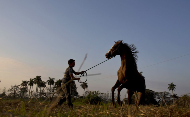 A man trains a horse at the state-run Azucarero horse ranch in Artemisa, Cuba. Already renowned for fine rum and fancy cigars, Cuba is carving out a new luxury niche that is attracting Latin American elites to the communist-run island: thoroughbred jumping horses. (AP Photo/Ramon Espinosa)