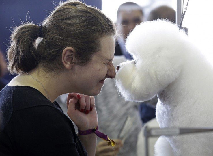 A Bichons Frise named Nurple gives Laura Warman a kiss at the Westminster Kennel Club show in New York, Monday, Feb. 16, 2015. (AP Photo/Seth Wenig)