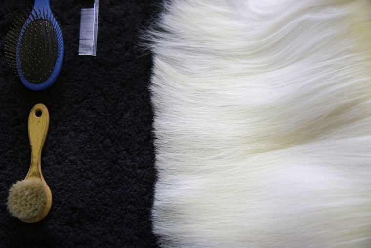Tools for a grooming lie next to a Maltese dog at the Westminster Kennel Club show in New York, Monday, Feb. 16, 2015. The show starts Monday morning and, to the owners of the 2,711 pooches set to take part, it's the Super Bowl, World Series and Daytona 500 of dogdom in the United States, one giant bark in the park. (AP Photo/Seth Wenig)