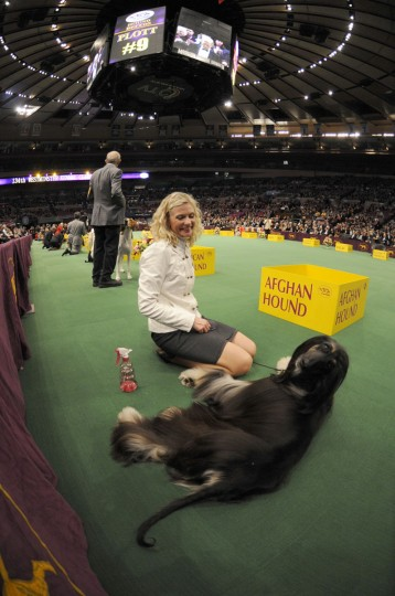 Anna Stromberg watches her Afghan hound react to a camera during the herding group competition at the Westminster Kennel Club Dog Show in Madison Square Garden in New York, Monday, Feb. 15, 2010. (AP Photo/Henny Ray Abrams)