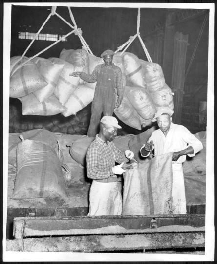 October 31, 1946: Workers upload sugar cane from Puerto Rico at the American Sugar Refinery. Photo by William Klender.