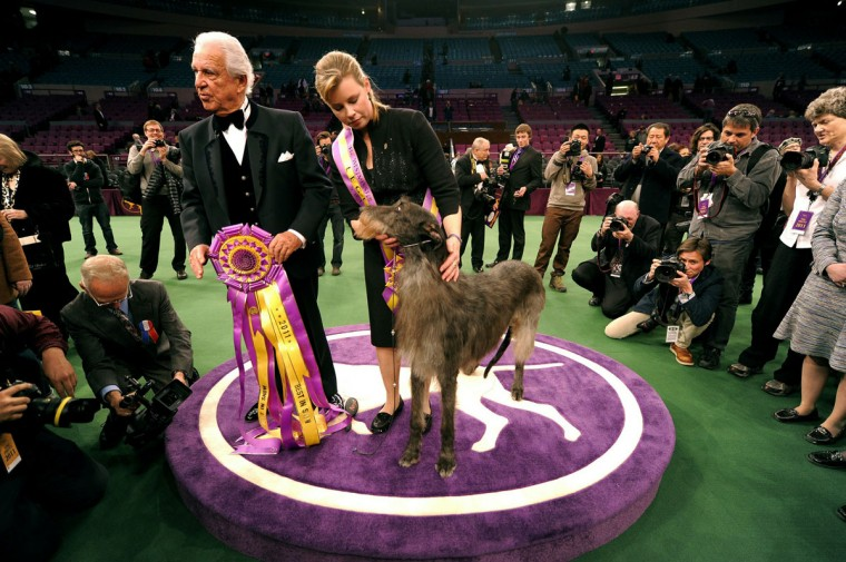 Handler Angela Lloyd and Hickory the Scottish Deerhound pose for photos after winning Best in Show during the 135th Westminster Kennel Club Dog Show at Madison Square Garden in New York, February 15, 2011. Holding ribbon is judge Paolo Dondina. (Timothy Clary/AFP/Getty Images)