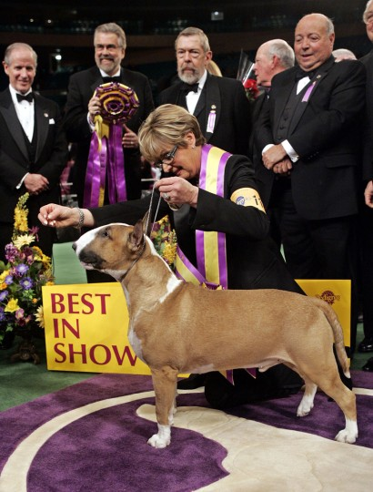 Rufus, a colored bull terrier, poses for photographs with handler Kathy Kirk after winning Best in Show at the 130th annual Westminster Kennel Club dog show, Tuesday, Feb. 14, 2006, in New York. (AP Photo/Kathy Willens)