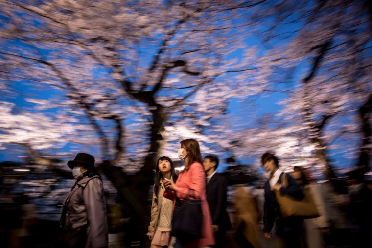 A young girl looks up at blooming cherry blossom trees at Chidorigafuchi on March 31, 2015 in Tokyo, Japan. The Cherry blossom season begins in Okinawa in January and moves north through Feburary peaking in Kyoto and Tokyo at the end of March and lasting just over a week. (Photo by Chris McGrath/Getty Images)