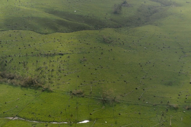 This aerial photo taken on March 16, 2015 shows uprooted trees in cyclone-ravaged Vanuatu after Super Tropical Cyclone Pam tore through on March 13, packing wind gusts of up to 320 kilometres (200 miles) an hour. Aid agencies on March 16 described conditions in cyclone-ravaged Vanuatu as among the most challenging they have ever faced, as the Pacific nation's president blamed climate change for worsening the devastation. (AFP Photo/Fred Payet)