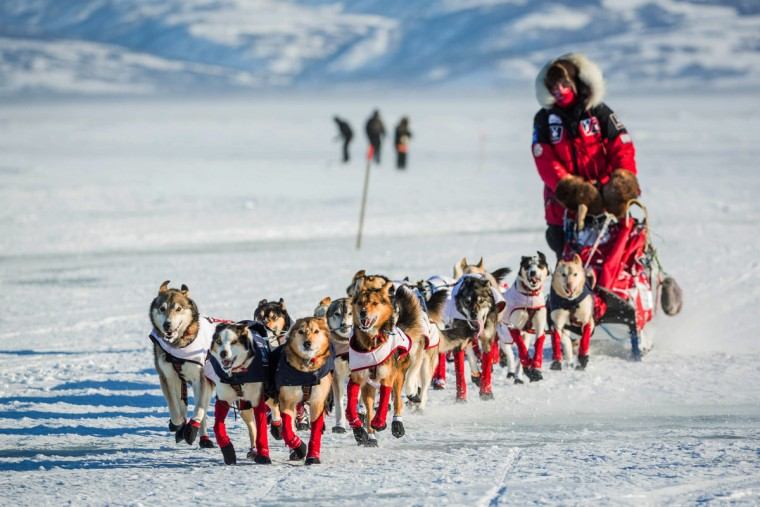 Aliy Zirkle mushes into the Unalakleet checkpoint in second place in the Iditarod on Sunday, March 15, 2015. Aaron Burmeister, 39, was the first musher to reach Unalakleet, the first checkpoint on the Bering Sea coast. (AP Photo/Alaska Dispatch News, Loren Holmes)