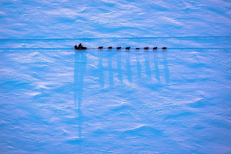 An Iditarod musher makes their way from Galena, Alaska to the new checkpoint of Huslia during the Iditarod Trail Sled Dog Race on Thursday, March 12, 2015. A lack of snow in southcentral Alaska forced race organizers to move the race north. (AP Photo/Alaska Dispatch News, Loren Holmes)