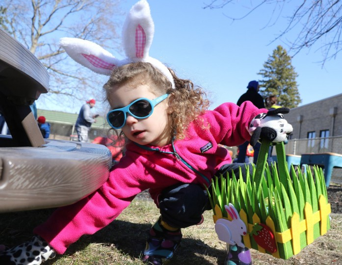 Hailey Giarraffa, 3, of Buffalo Grove, reaches for plastic eggs hidden under a bench at Nutphree's Bakery's first food free Easter egg hunt for children with food allergies at Trinity United Methodist Church on Saturday, March 28, 2015, in Mount Prospect, Ill. Giarraffa is allergic to dairy, eggs, peanuts and other food items. (AP photo / Daily Herald, George LeClaire)