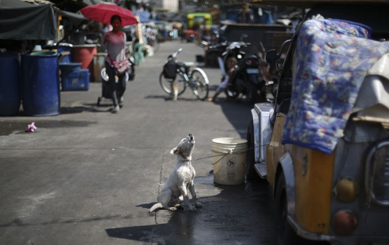 A dog barks as he is chained to a jeep after taking a bath along the road in a poor district of Manila, Philippines Tuesday, Feb. 10, 2015. (AP Photo/Aaron Favila)