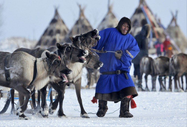 In this photo taken on Sunday, March 15, 2015, a Nenets man pulls his reindeer at the Reindeer Herder's Day in the city of Nadym, in Yamal-Nenets Region, 2500 kilometers (about 1553 miles) northeast of Moscow, Russia. For the indigenous nomadic Nenets people, the Reindeer Herder's Day offers a chance to show their prowess in wrestling, high jumps and other traditional local sports, but, above all, reindeer races. (AP Photo/Dmitry Lovetsky)