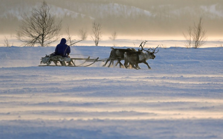 In this photo taken on Sunday, March 15, 2015, a Nenets man rides in a reindeer sled at the Reindeer Herder's Day in the city of Nadym, in Yamal-Nenets Region, 2500 km (about 1553 miles) northeast of Moscow, Russia. The Reindeer Herder's Day is celebrated annually in Russiaís Yamal-Nenets region in the Arctic and for the Nenets people, it offers a chance to show their prowess in wrestling, high jumps and other traditional sports, but, above all, reindeer races. (AP Photo/Dmitry Lovetsky)