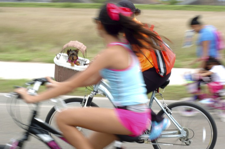 A puppy peers out from a bicycle basket Sunday, March 22, 2015, during CycloBia in Brownsville, Texas. (AP Photo/The Brownsville Herald, Miguel Roberts)