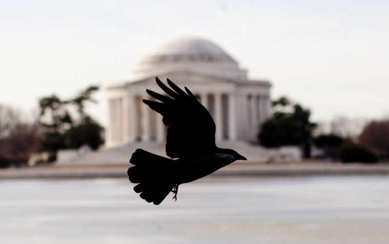 A bird takes flight as the Thomas Jefferson Memorial is seen in the background across the Tidal Basin in Washington, Friday, March 13, 2015. (AP Photo/Carolyn Kaster)