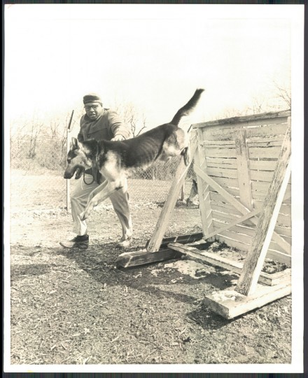 Officer Leon Smith takes his dog Major over a low obstacle. (Baltimore Sun archives, 1969)