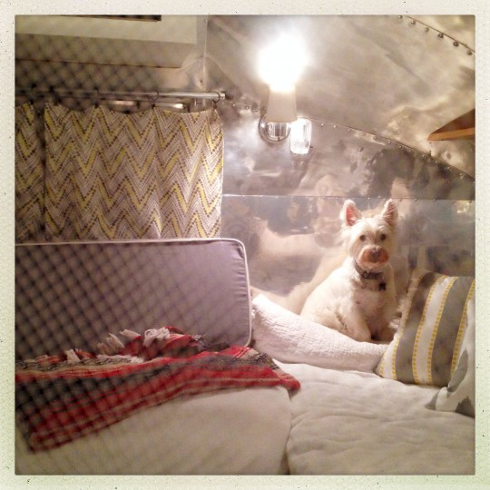 "Cooper waits for bedtime inside ""Ethel,"" shielded from the bugs by netting in the doorway. The 1963 Bambi is supposed to sleep three adults, but room is a little tight with two adults and three dogs. (Christopher T. Assaf/Baltimore Sun)"