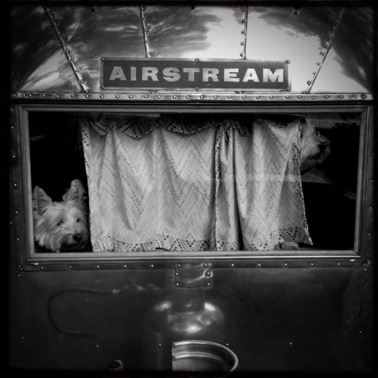 "Cooper and Chester keeping the watch from inside ""Ethel,"" our 1963 Airstream Bambi. (Christopher T. Assaf/Baltimore Sun)"