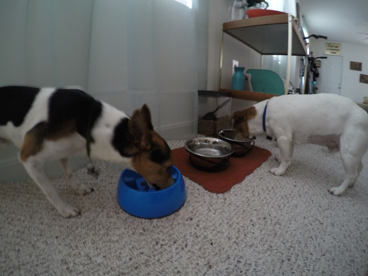 Breakfast time! Feed the dogs before yourself…