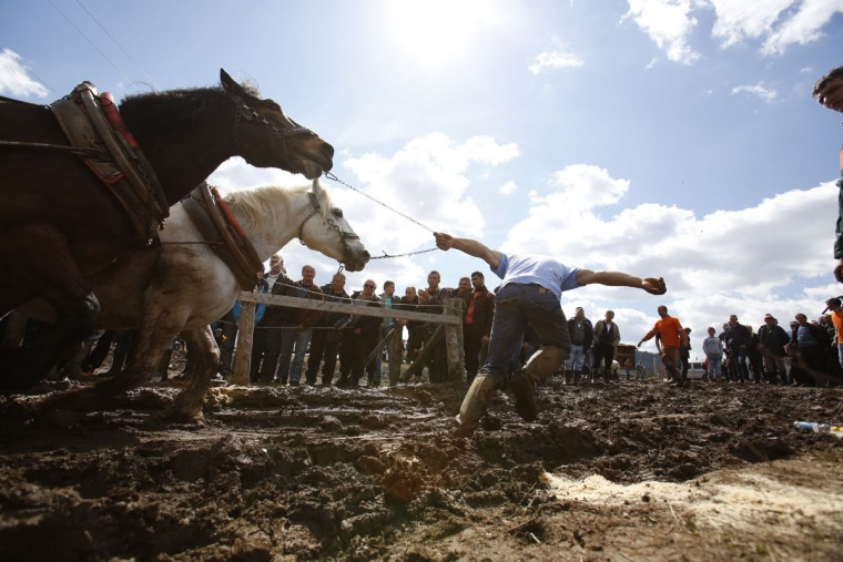 A Bosnian man urges his horses to pull logs up a hill during a competition in the Bosnian town of Sokolac 50 kms west of Sarajevo, Bosnia,on Monday, April, 13, 2015. The annual festival celebrates the centuries old tradition of pulling logs honoring the owners of the strongest horses. Owners of the horses gather from all over Bosnia and beyond, and compete in a show of horse strength. (AP Photo/Amel Emric)