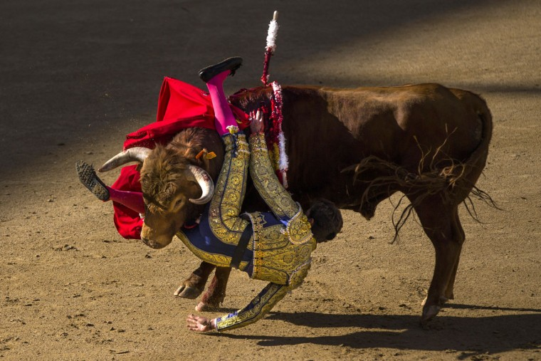 Bullfighter Tomas Angulo is tossed by a bull during a bullfight at Las Ventas bullring in Madrid, Spain, Sunday, April 19, 2015. Bullfighting is a traditional spectacle in Spain and the season runs from March to October. (AP Photo/Andres Kudacki)