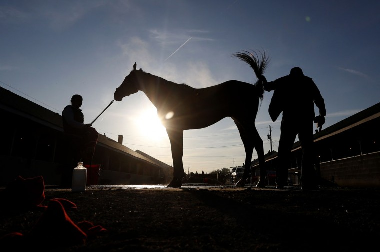 A horse gets a bath after a morning workout at Churchill Downs Wednesday, April 29, 2015, in Louisville, Ky. (AP Photo/Charlie Riedel)
