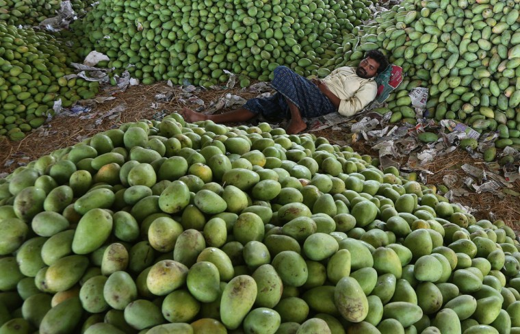 An Indian laborer sleeps surrounded by mounds of mangoes at a fruit market in Hyderabad, India, Thursday, April 23, 2015. India recognizes the mango as its national fruit and is the world's largest mango producer. (AP Photo/Mahesh Kumar A.)