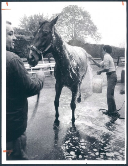 Assistant trainer Antonio Paz holds Flying Nashua, who gets a bath from groom Johnnie Revera outside the Preakness barn at Pimlico. (William Hotz/Baltimore Sun, 1981)