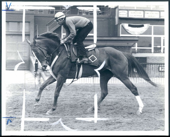 Kentucky Derby winner Genuine Risk is in a haughty prance as she works Pimlico for the first time for exercise rider Juan Ortiz. (Baltimore Sun, 1980)