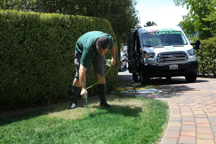 Brown Lawns Green owner Bill Schaffer applies green paint to a brown lawn on May 29, 2015 in Novato, California. As the severe California drought continues to worsen, homeowners and businesses looking to conserve water are letting lawns go dormant and are having them painted to look green. The paint lasts eigh weeks on dormant lawns and will not wash off. (Justin Sullivan/Getty Images)