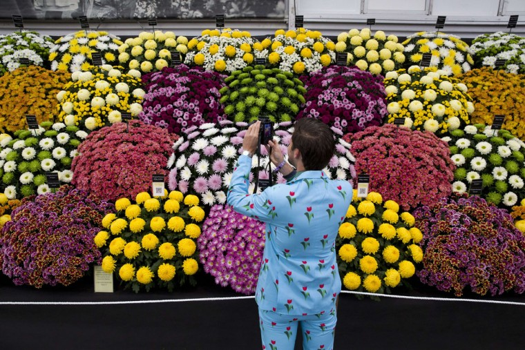 A visitor dressed in a flower themed suit looks at flowers on display in the Great Pavilion at the 2015 Chelsea Flower Show in London on May 18, 2015. The Chelsea flower show, held annually in the grounds of the Royal Hospital Chelsea, will run this year from May 19-23. (AFP Photo/Justin Tallis)