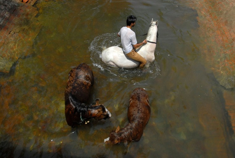 Indian horseman Rahul and his horses cool off in a canal on the outskirts of Jalandhar on May 28, 2015, as scorching weather conditions continue across India. More than 1,100 people have died in a blistering heatwave sweeping India, authorities said, as forecasters warned searing temperatures would continue. (Shammi Mehra/AFP/Getty Images)