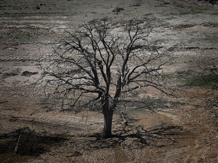 A dead tree is seen on a dried section of the New Melones Lake reservoir which is now at less than 20 percent capacity as a severe drought continues to affect California on May 24, 2015. California has recently announced sweeping statewide water restrictions for the first time in history in order to combat the region's devastating drought, the worst since records began. (Mark Ralston/AFP/Getty Images)