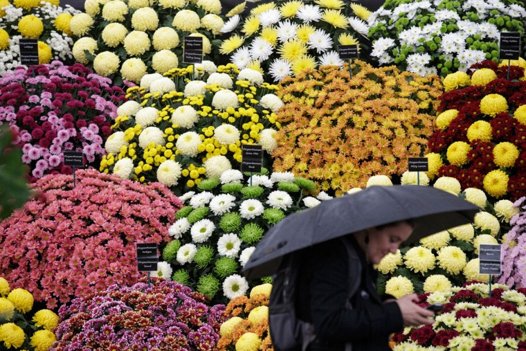 A person uses her phone as she walks past a display, at the Chelsea Flower Show in London, Monday, May 18, 2015. Horticulturists from around the world are displaying their garden designs at the Royal Hospital in Chelsea, London, and the premier garden and social event opens to the public on Tuesday.(AP Photo/Tim Ireland)