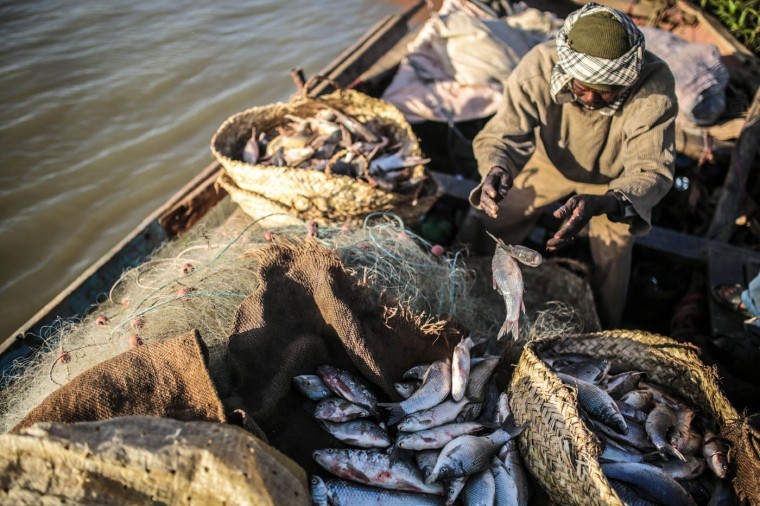 In this Wednesday, April 15, 2015 photo, a Sudanese fishermen arranges his catch in baskets on his boat, in Omdurman, Khartoum, Sudan. The river fishermen are in competition with their deep-water counterparts on the Red Sea coast. Area wholesalers and consumers tend to prefer the Red Sea fish in summer and the bonier Nile fish in winter. (AP Photo/Mosa'ab Elshamy)