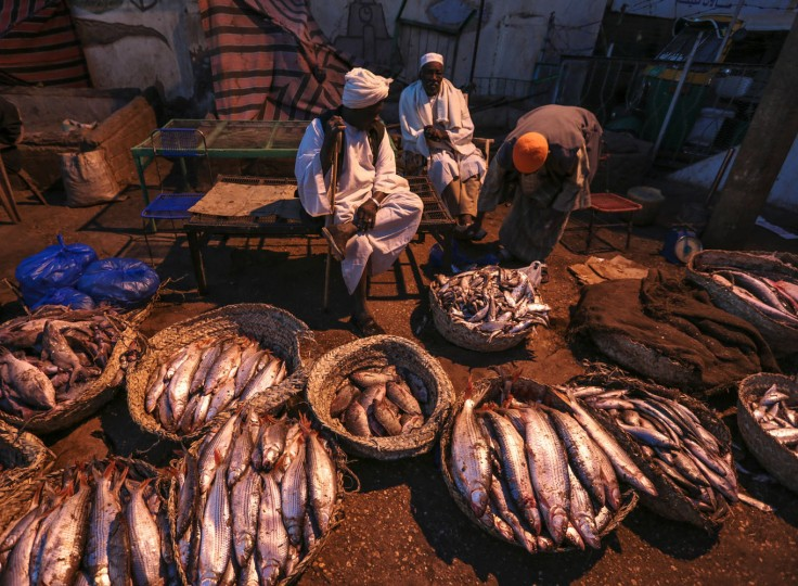 In this Thursday, April 16, 2015 photo, a Sudanese fisherman display their fish for sale at the Omdurman fish market, which operates before dawn until sunrise, in Omdurman, Khartoum, Sudan. Fishermen can catch up to100 kilograms (221 pounds) of fish on a really good day, but most days average around 50 kilograms.(AP Photo/Mosa'ab Elshamy)