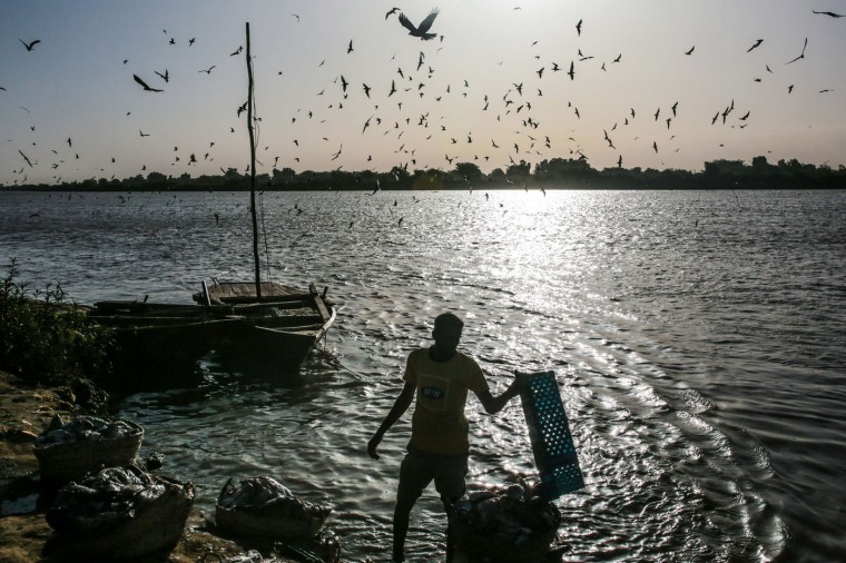 "In this Wednesday, April 15, 2015 photo, birds circle above a Sudanese fisherman as he washes his day's catch in the early morning hours by the Nile River bank, in Omdurman, Khartoum, Sudan. The river fishermen are in competition with their deep-water counterparts on the Red Sea coast. ""The Nile is gentle,"" fisherman Hamad al-Nil says with a smile, whereas ""the sea is dangerous."" (AP Photo/Mosa'ab Elshamy)"