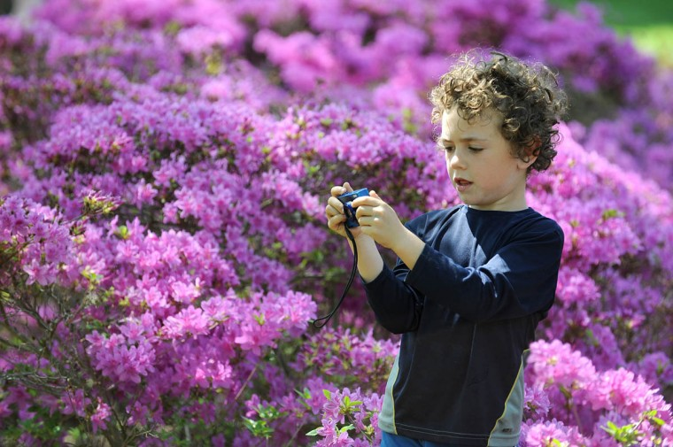 Finley Manekin, 5, from Baltimore, takes pictures of the flowers in bloom at Sherwood Gardens. (Algerina Perna/Baltimore Sun)